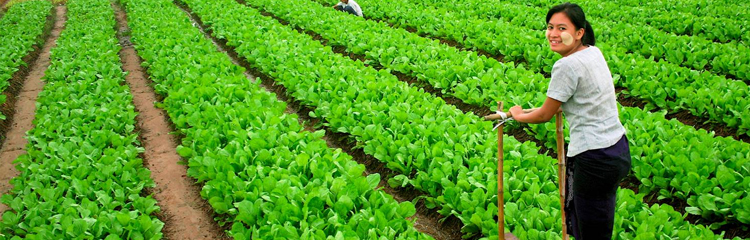 Myanmar�s agricultural sector has huge potential for growth