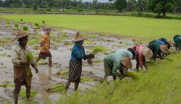 Japan to provide loans to Myanmar agricultural banks