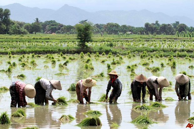 MYANMAR EARNS OVER US$ 124 MILLION FROM RICE EXPORTS