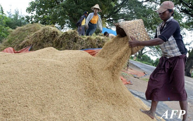 MYANMAR TO BOOST RICE PRODUCTION