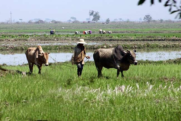 MYANMAR'S TARGET OF EXPORTING 3 MILLION TONS OF RICE DURING FISCAL 2014 IS IMPOSSIBLE TO ACHIEVE: EXPERTS