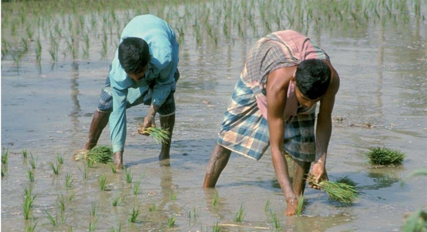 MYANMAR PUTS FOCUS ON FARMING TO BOOST GROWTH