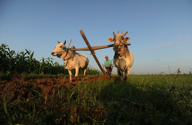 MYANMAR FARMERS CALL FOR AMENDMENTS TO LAND LAW